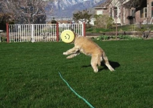 Dog Catch Fail