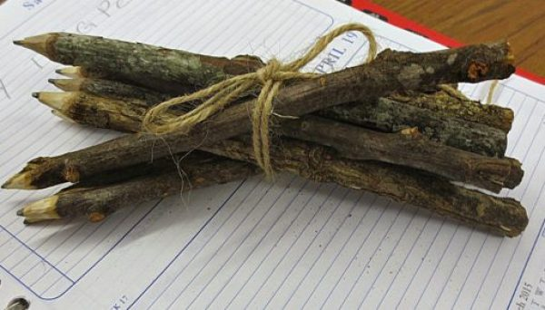 Twigs and Branches Transformed Into Pencils