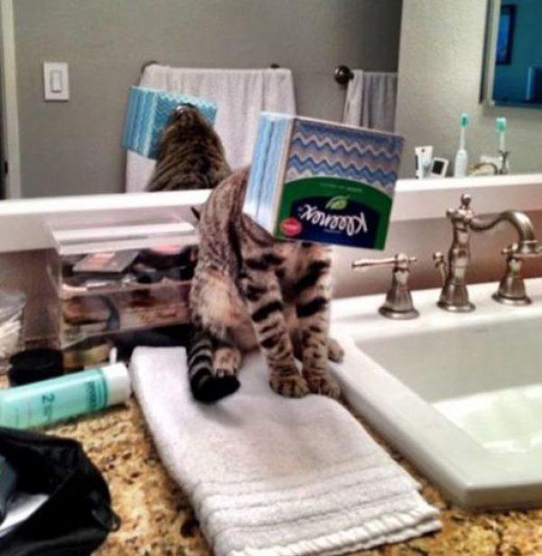 Cat Needs a Little Help