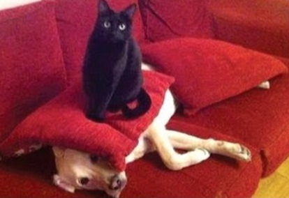 Cat Bulling the Dog