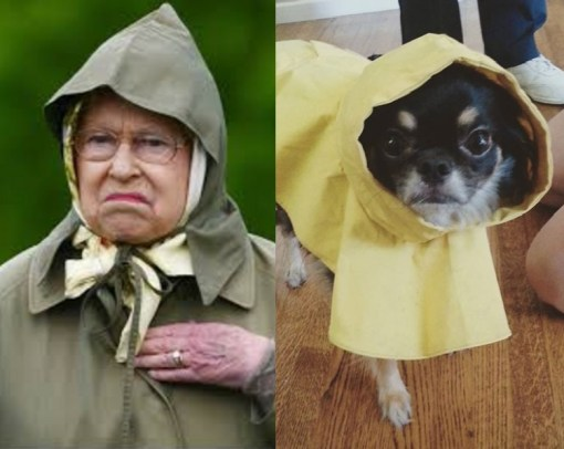 Dog and Queen in Raincoats