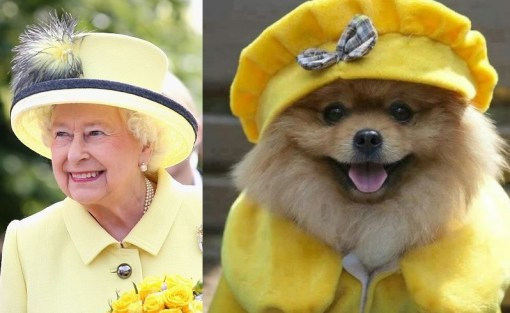 Dog and Queen Wearing Yellow
