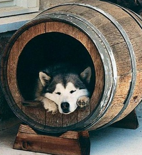 Wooden Barrel Transformed Into a Dog House