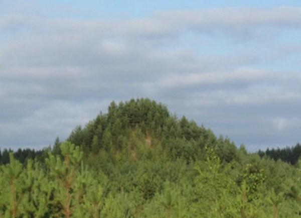 Tree Mountain, Ylöjärvi