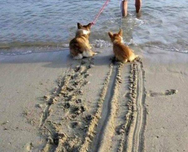 Naughty Beach Dog