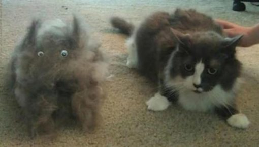 Top 10 Hair Shedding, Super Funny Moulting Cats