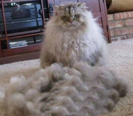 Funny Cats Hair