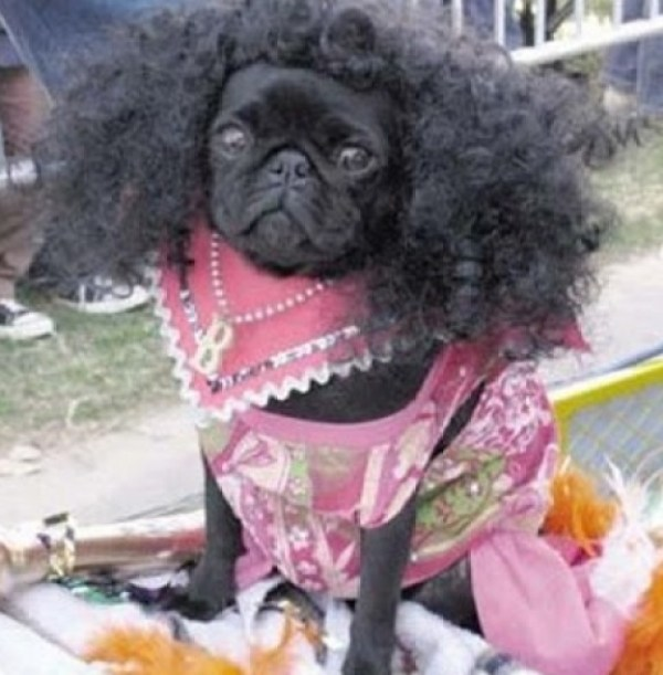 Dog With an Afro Hairstyle