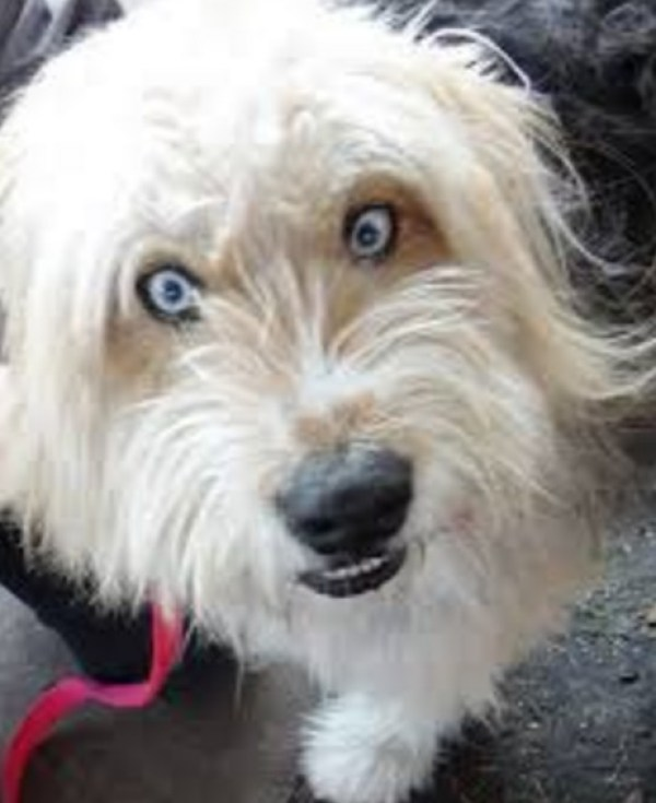 Crazy Eyes - funnydogsite.com