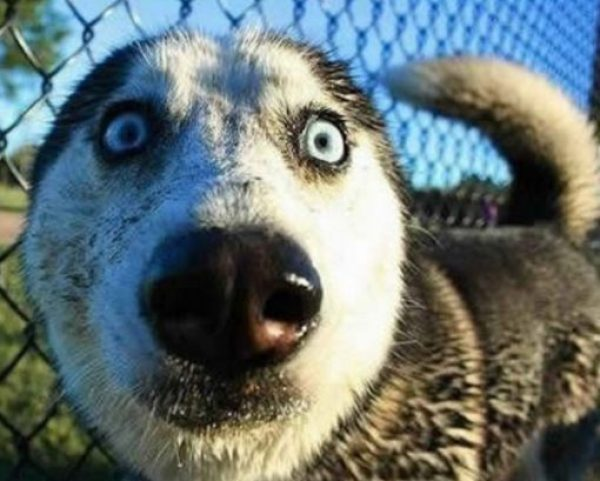 Ten Dogs Who Have the Craziest Eyes You Will Ever See!