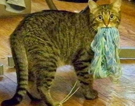 Top 10 Guilty as Sin Cats Caught In The Act