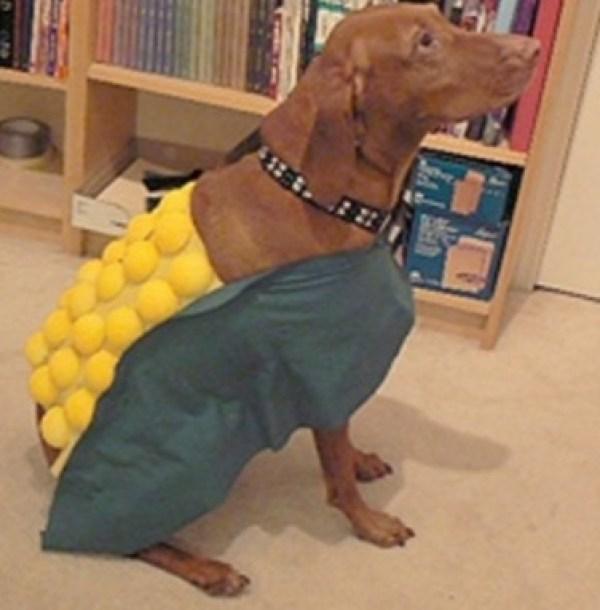 Corn on the Cob Dog Costume Fail