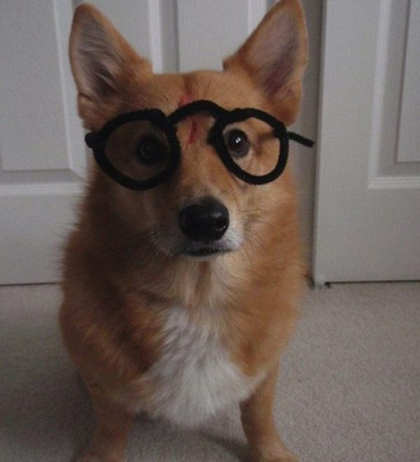 Harry Potter Dog Costume Fail
