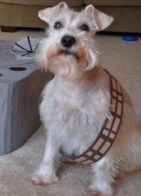 Chewbacca Dog Costume Fail