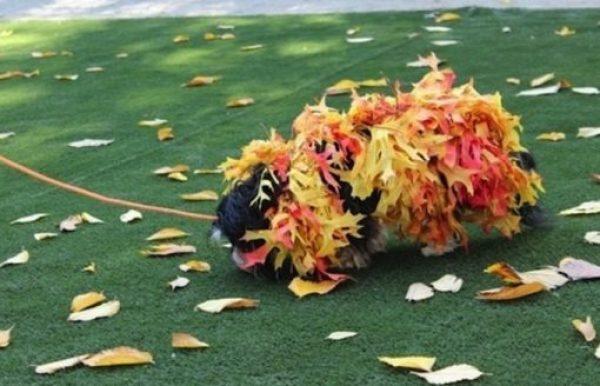 Pile of Leaves Dog Costume Fail