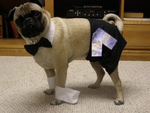 Chippendale Dog Costume Fail