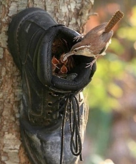 Birdhouse Made From an Old Boot