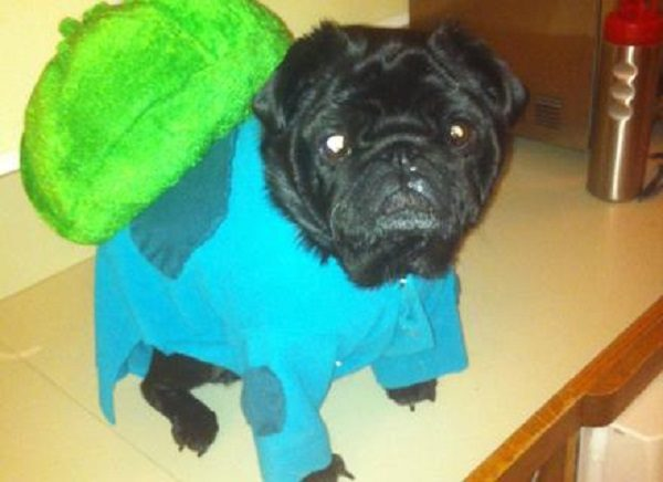 Dog Dressed as Bulbasaur