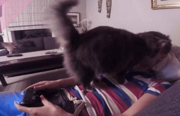 Attention seeking cat