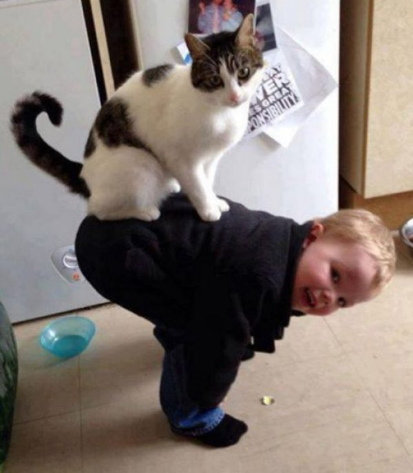 This Cat Is Dangerous to Babies