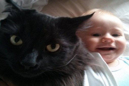 Top 10 Cats You Need To Keep Away From Babies