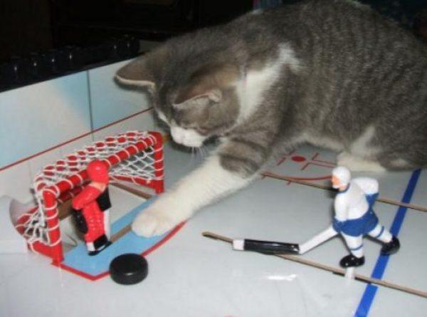 Cat Playing Hockey