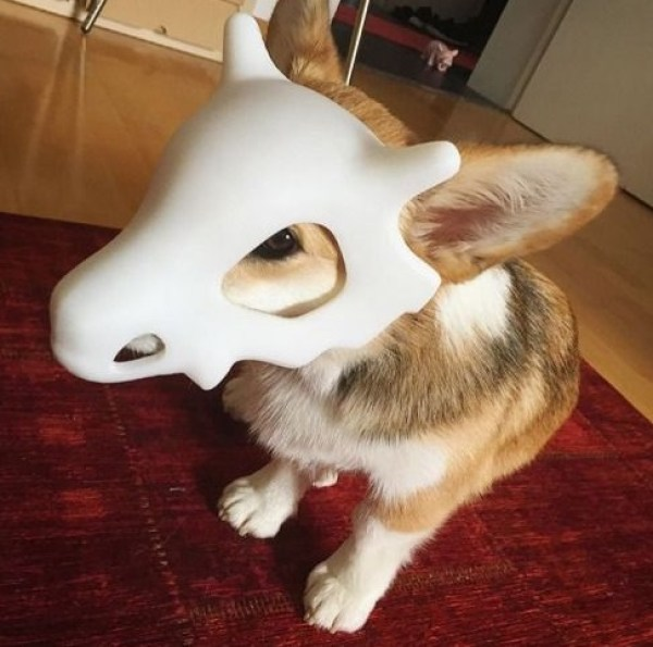 Dog Dressed as Cubone