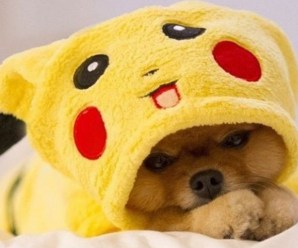 Top 10 Gotta Catch'em All Pokemon Dogs