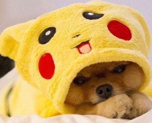 Top 10 Gotta Catch'em All Pokemon Dogs
