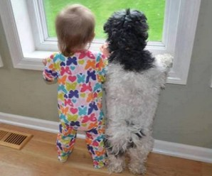 Top 10 Very Funny and Sometimes Naughty Dogs Copying Kids