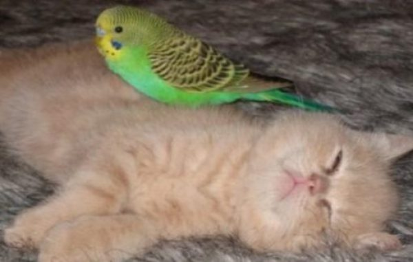 Cat Who Loves Birds