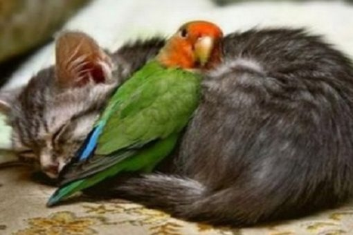 Top 10 Feather Friendly Cats Who Love Birds