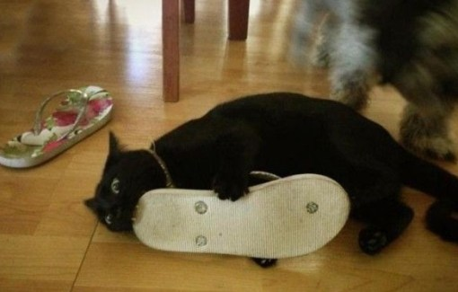 Cat Eating a Flip-Flop