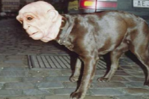 top 10 scariest halloween costumes for dogs you will ever see the top 10 of anything and everything
