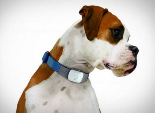 GPS Tracker Dog Collar
