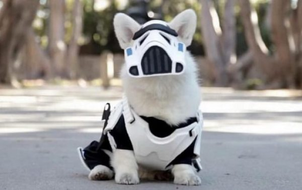 Dog Dressed as a Stormtrooper