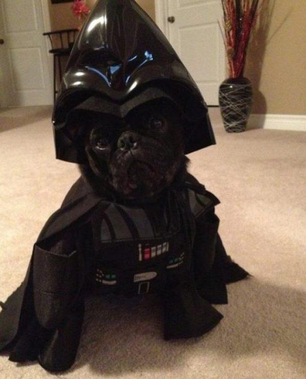 Dog Dressed as Darth Vader