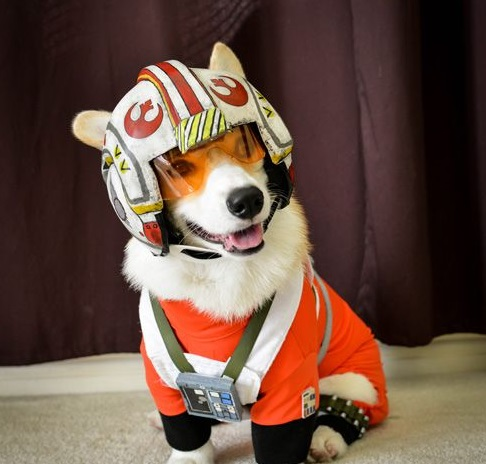 Dog Dressed as Wedge Antilles: X-Wing Pilot