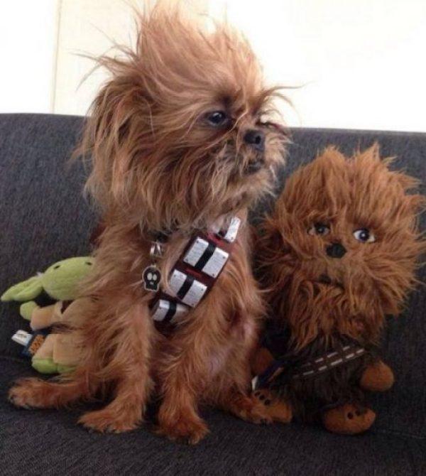 Dog Dressed as Chewbacca