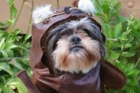 Top 10 Empire Defeating Dogs Dressed as Starwars Characters
