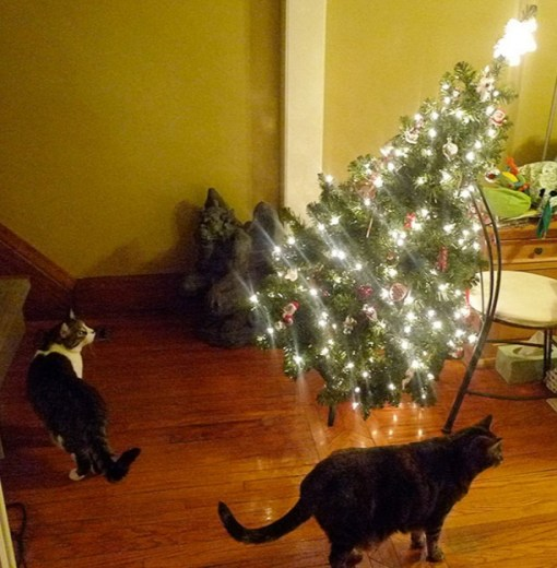 Cats Destroys Christmas Tree