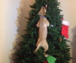 Top 10 Grinch Loving Dogs That Destroyed Christmas