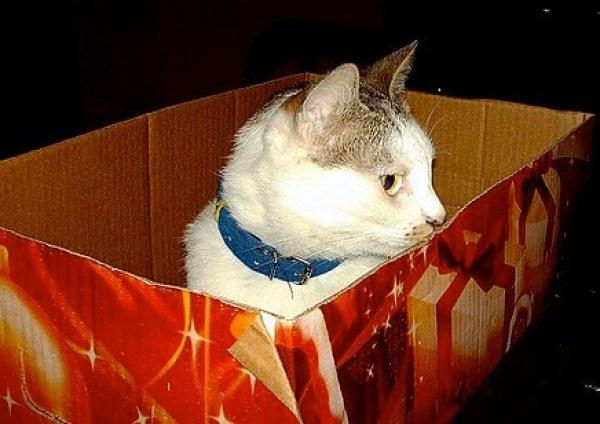 Christmas Cat Box