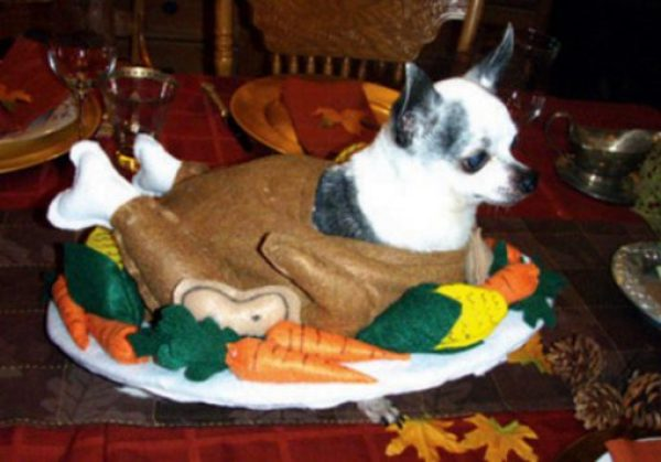 Dogs Dressed Up as a Christmas Turkey