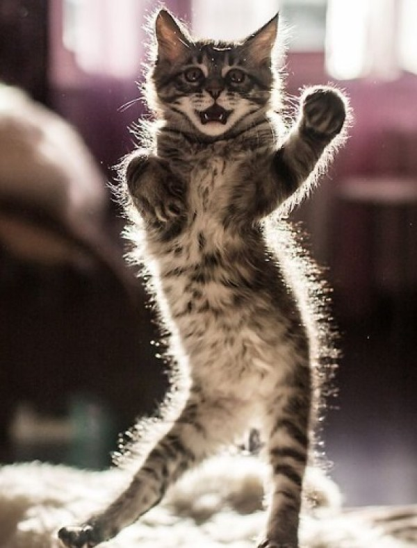 Cat Dancing