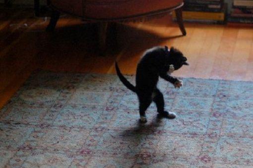 Top 10 Cats That Dance Like Michael Jackson