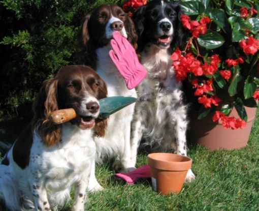 Dogs Doing Some Gardening