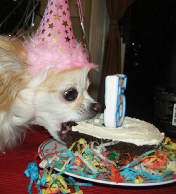This Dog Loves Cake