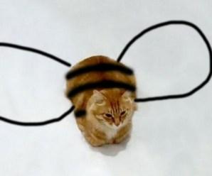 Top 10 Very Funny Cat Doodles or Cat Doodle Art