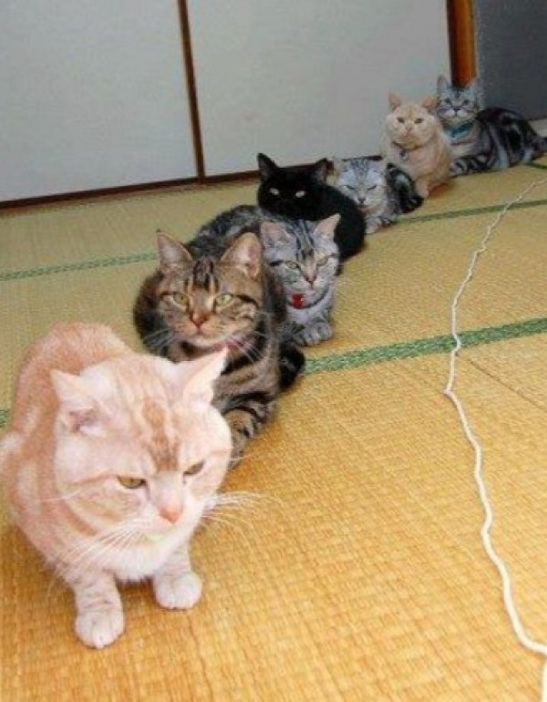 Cats Waiting in a Queue